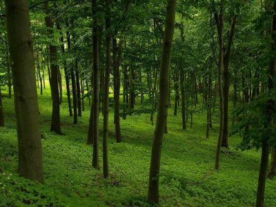 Аренда леса, лесоперерабатывающие предприятие