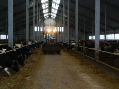 Продажа хозяйства, молочное производство